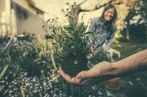 3 Tips For Moving Plants Safely