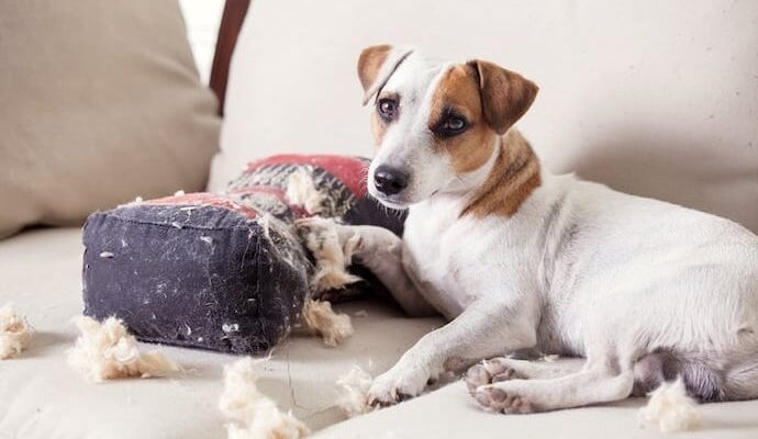 Roger Wolfson – How to Help Your Dog With Separation Anxiety